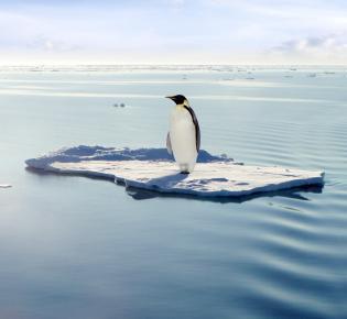 Pinguin auf einer treibenden Eisscholle