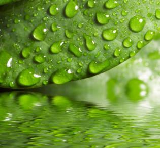 Blatt mit Regentropfen spiegelt sich im Wasser