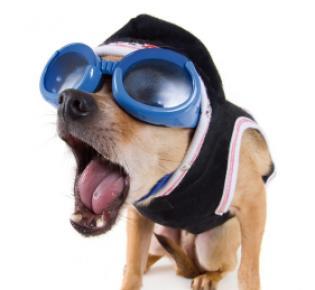 Hund mit Bikerbrille