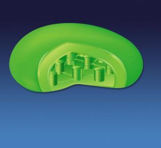 Chloroplast - Illustration